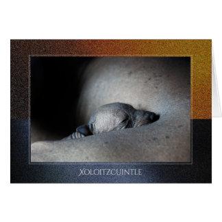 Xoloitzcuintle Puppy Greeting Card