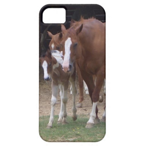 XX- Horse Photography Art Design iPhone 5 Covers