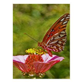 XX- Monarch Butterfly on Zinnia Post Card