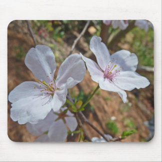 XX- Pink Cheery Blossom Photography Mousepads