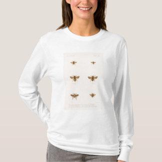 XXXIV Vespa, Nomia, Bombus, Melissodes T-Shirt