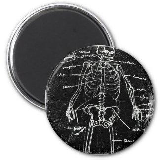 yaie tokyo human skeleton anatomy magnet