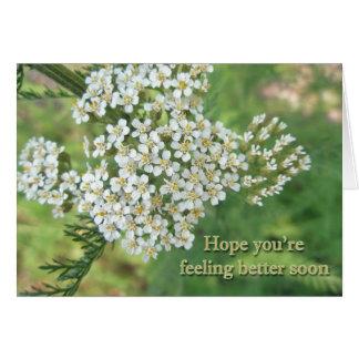Yarrow (Achillea millefolium) Speedy Recovery Note Card