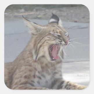 Yawning Bobcat Square Sticker