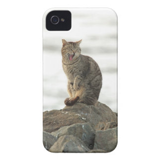 Yawning Cat on the Rocks Blackberry Bold Case