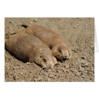 Yawning Prairie Dog Greeting Card