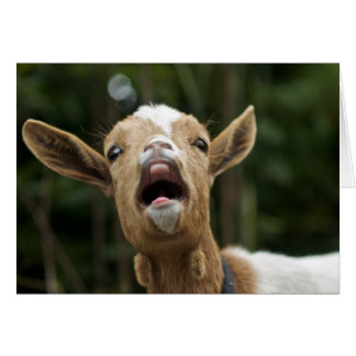 """Yelling Goat Yells for You"" Card"