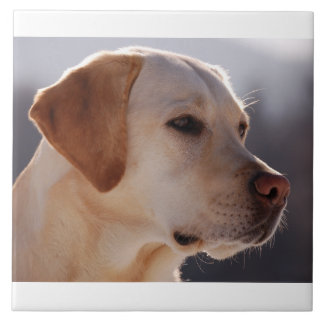 yellow 3 Labrador_Retriever.png Tile