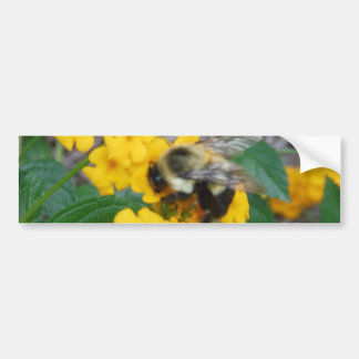 yellow and black Bee on yellow flower Bumper Sticker
