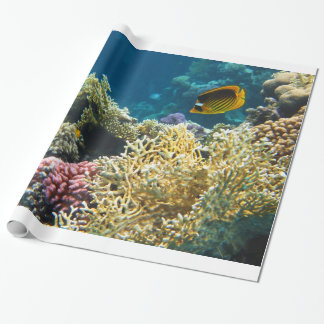Yellow and Black Butterfly Fish