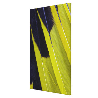 Yellow And Black Feather Abstract Canvas Print