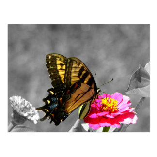 Yellow and Black Monarch Butterfly Postcard