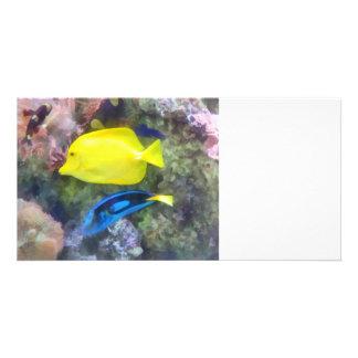 Yellow and Blue Tang Fish Photo Cards