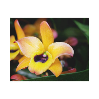 Yellow and Brown Orchid Canvas Print