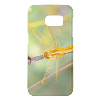 Yellow and Gold Dragonfly