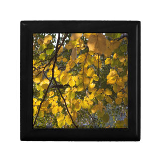 Yellow and green autumn leaves gift box