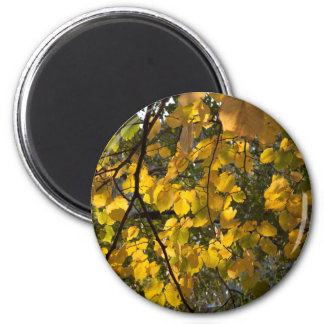 Yellow and green autumn leaves magnet