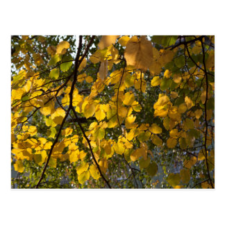 Yellow and green autumn leaves postcard