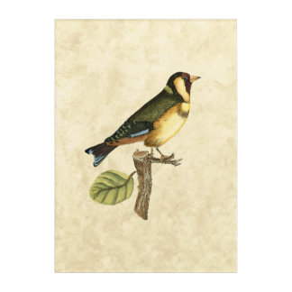 Yellow and Green Bird Perched on a Little Branch Acrylic Print