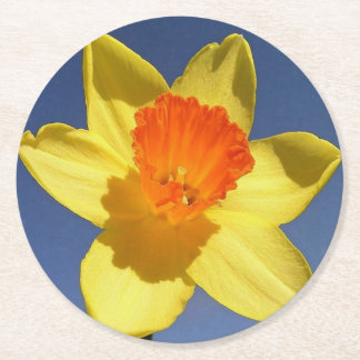 Yellow and Orange Colored Daffodil Round Paper Coaster