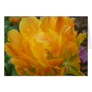 Yellow And Orange Double Tulip Petals Card