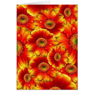 Yellow and Orange Gerbera Daisies Card