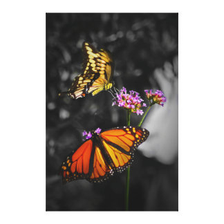 Yellow and Orange Monarch Butterflies on Flowers Canvas Print
