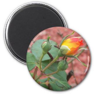 yellow and orange rose bud magnet