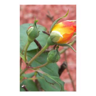 yellow and orange rose bud stationery