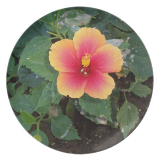 Yellow and Pink Flower Photo Dinner Plate