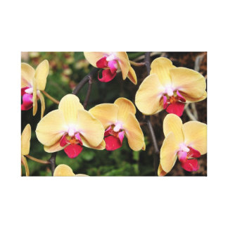 Yellow and Pink Orchids   Wrapped Canvas