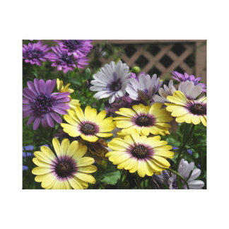 Yellow and Purple African Daisies Canvas Print
