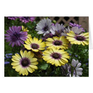 Yellow and Purple African Daisy Flowers Card