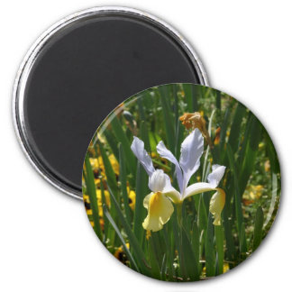 yellow and purple iris 12x10 magnet