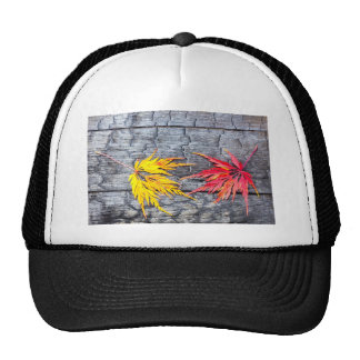 Yellow and red maple leaf on black burnt wood cap