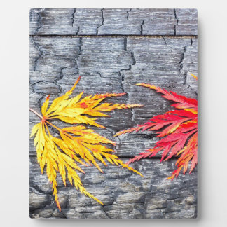 Yellow and red maple leaf on black burnt wood plaque