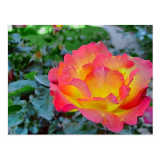 yellow and red rose postcard