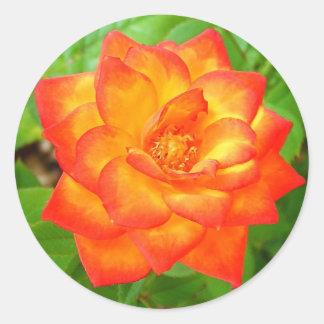 Yellow and Red Rose Round Sticker