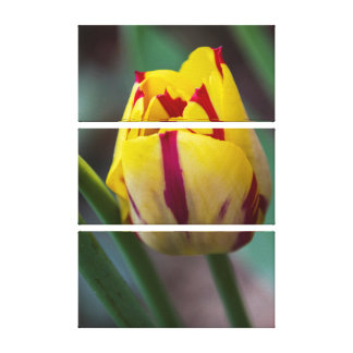 Yellow and Red Stripes Tulip Triptych Wall Art Stretched Canvas Prints