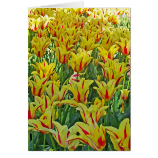 Yellow And Red Tulips... Greeting Card