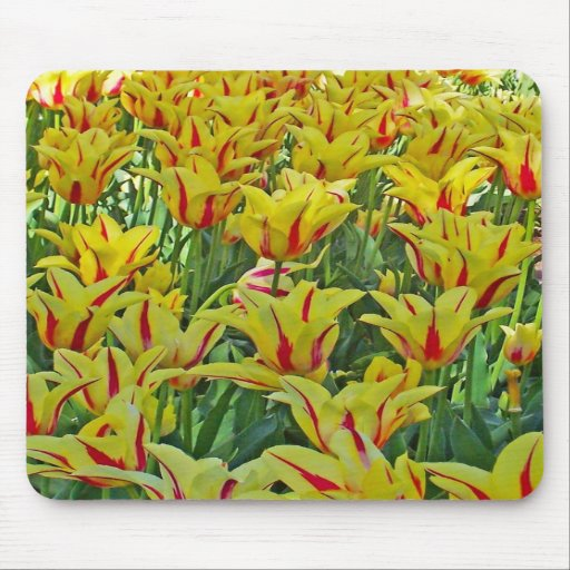 Yellow And Red Tulips... Mouse Mat