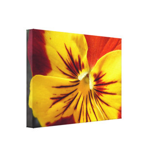 Yellow and Rusty Red Pansy Canvas Print