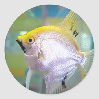 Yellow And Silver Fish In The Tank Round Stickers