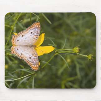 Yellow and White Butterfly Mouse Pad