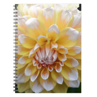 Yellow and White Dahlia Notebook