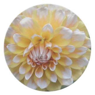 Yellow and White Dahlia Plate