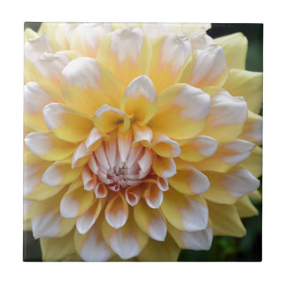 Yellow and White Dahlia Tile