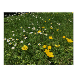 Yellow and White Daisies Poster