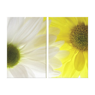 Yellow and White Daisies Stretched Canvas Prints