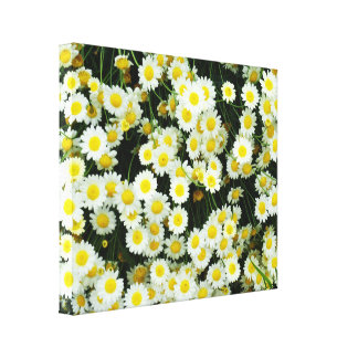 Yellow And White Daisy Button Flowers, Canvas Print